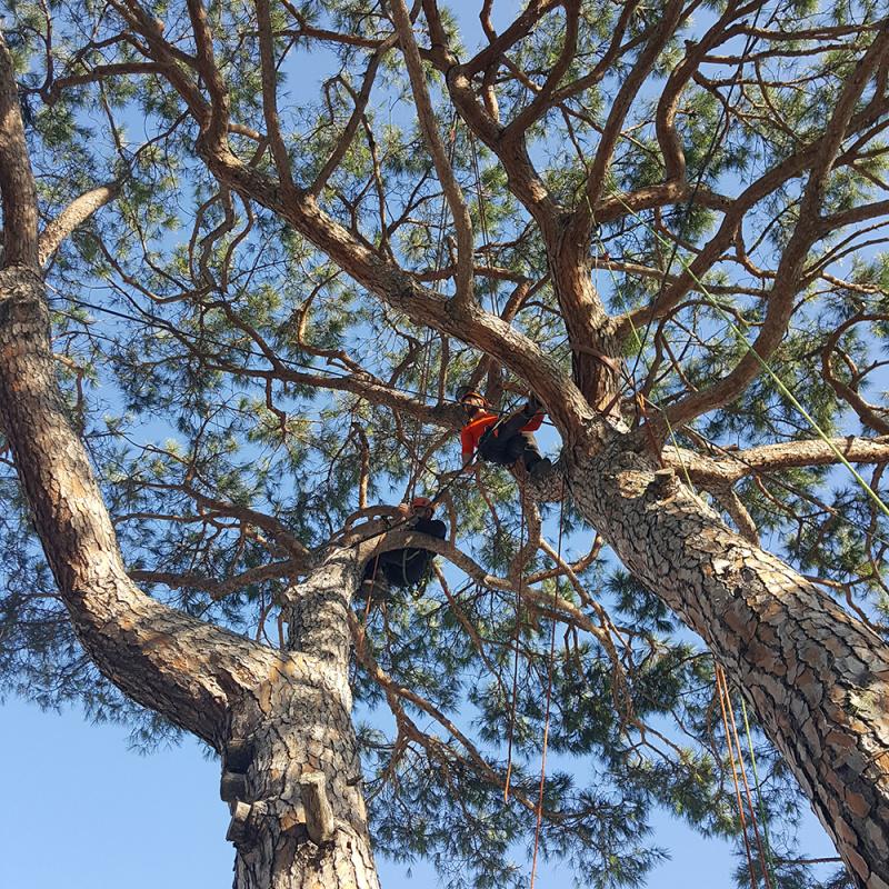 Potature treeclimbing
