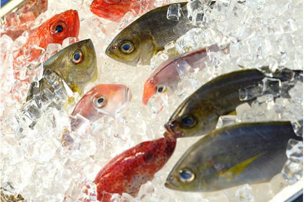 Carne e Pesce surgelati*