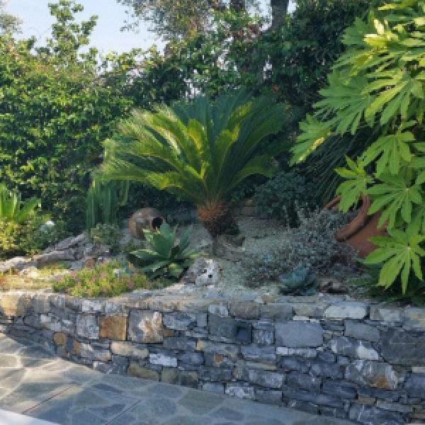 Aiuola con giare e piante grasse