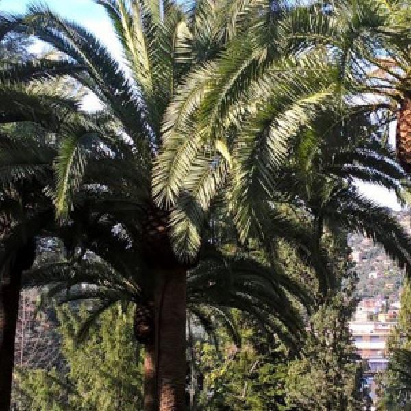 Parco con palme