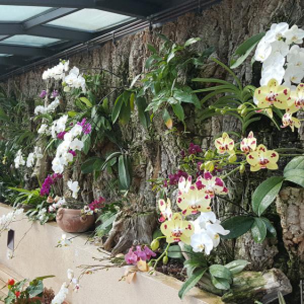 Serra con orchidee
