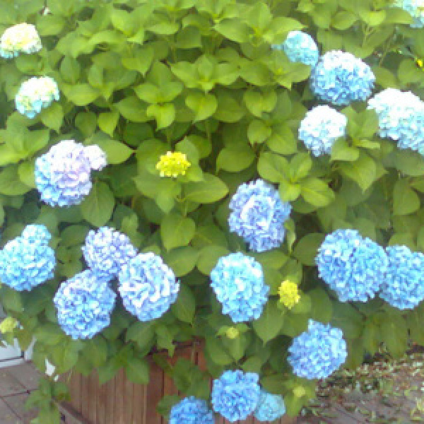 Vasi in legno fioriti