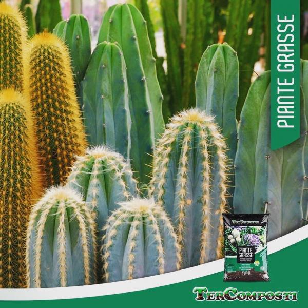 terriccio a base torbosa arricchito con sabbie silicee, ideale per il rinvaso e garantire un'ottima ossigenazione!