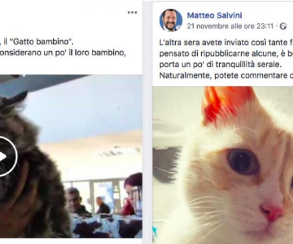 Cosa ci fanno i gattini sulla pagina Facebook di Salvini?