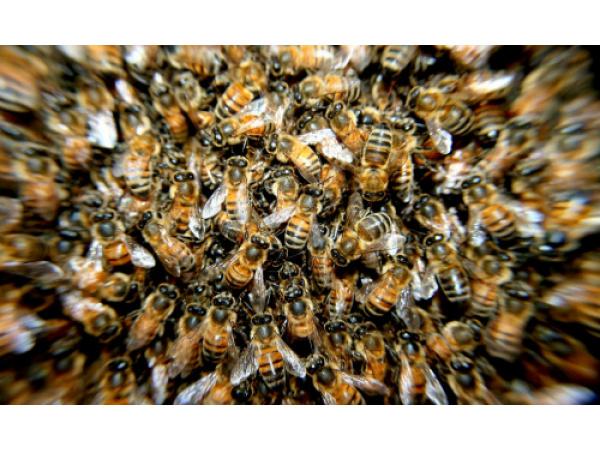 Gli insetti potrebbero sparire entro un secolo. E le conseguenze sarebbero disastrose