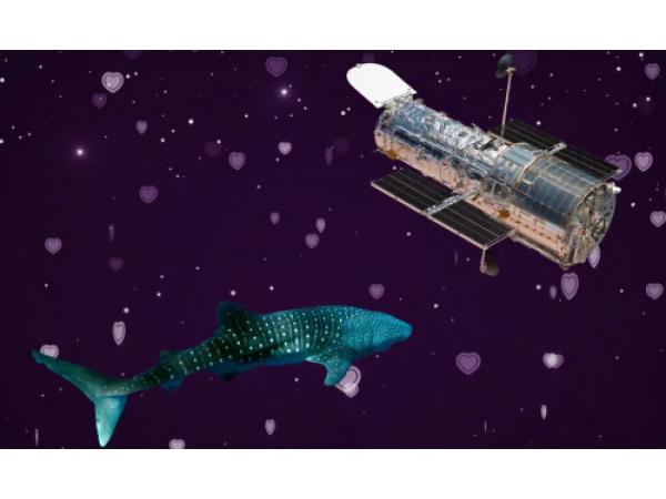 L'osservatorio spaziale Hubble e gli squali balena hanno qualcosa in comune