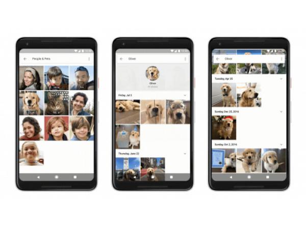 Ora Google riconosce la razza di cani e gatti nelle tue foto