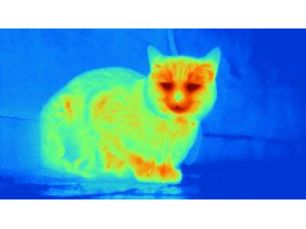 I topi che vedono l'infrarosso grazie a occhi potenziati