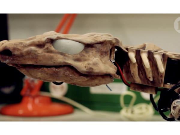 I fossili dei primi animali sulla Terra prendono vita grazie alla robotica