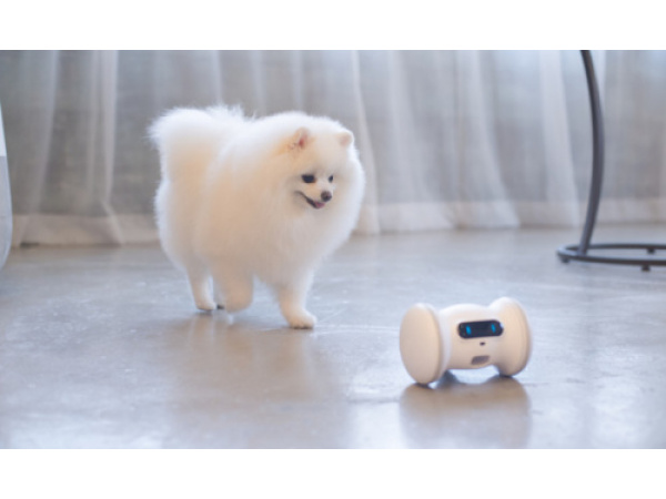 Un robot che combatte l'obesità di cani e gatti