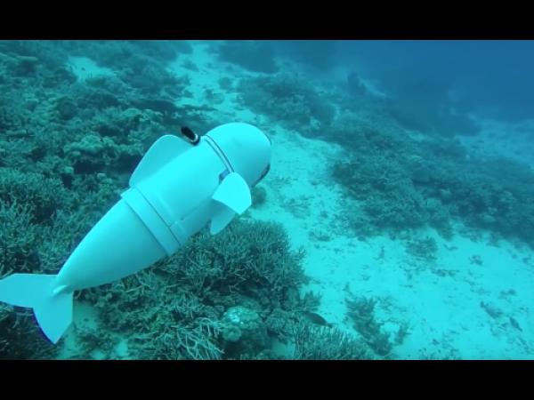 Ecco SoFi, il robot che nuota come un pesce