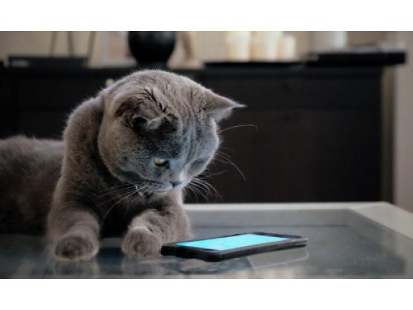 Giornata mondiale del gatto, ecco le leggende metropolitane sui felini