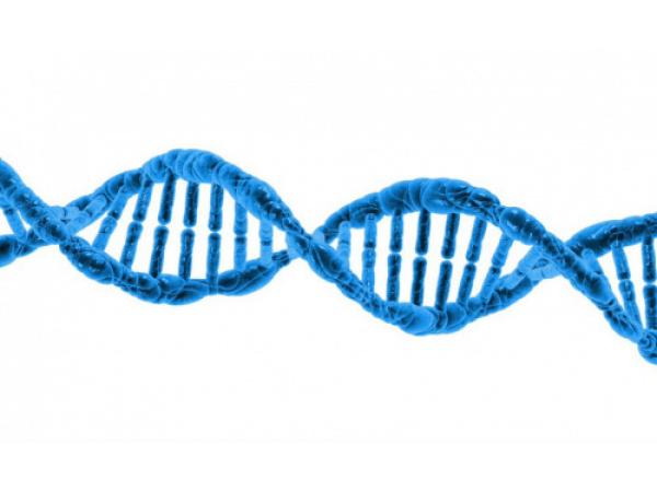 Una nuova tecnica Crispr per combattere l'obesità (senza modificare il genoma)