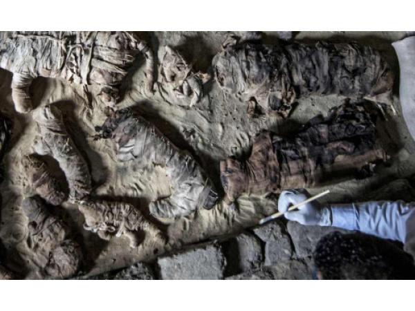 Le foto delle mummie di gatti e scarabei ritrovate a sud del Cairo