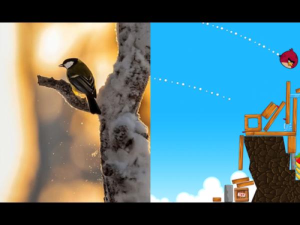 Gli uccellini di Angry Birds, nella realtà