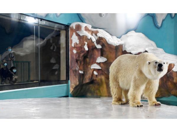 In Cina apre (tra le polemiche) un hotel popolato da orsi polari