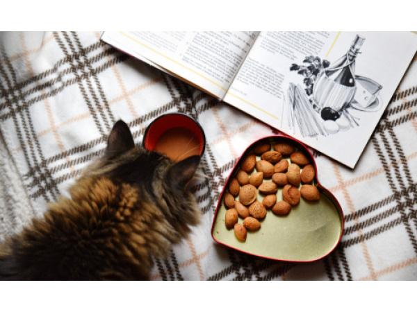 Il ricettario con 12 piatti da abbinare a quello che mangia il vostro gatto