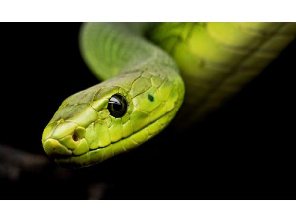 Da dove arriva la paura dei serpenti?
