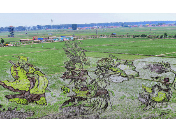 Disegnare piantando il riso