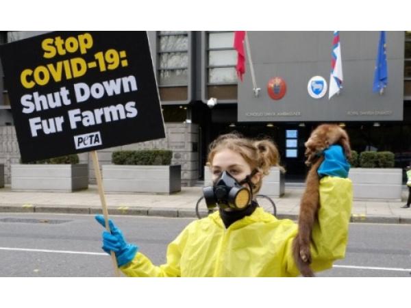 Molti stati hanno chiesto alla Commissione Ue di vietare l'allevamento di animali da pelliccia