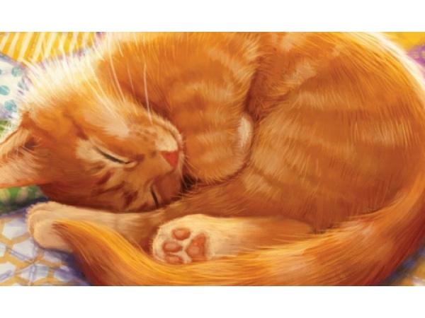 5 giochi da tavolo per gli amanti dei gatti