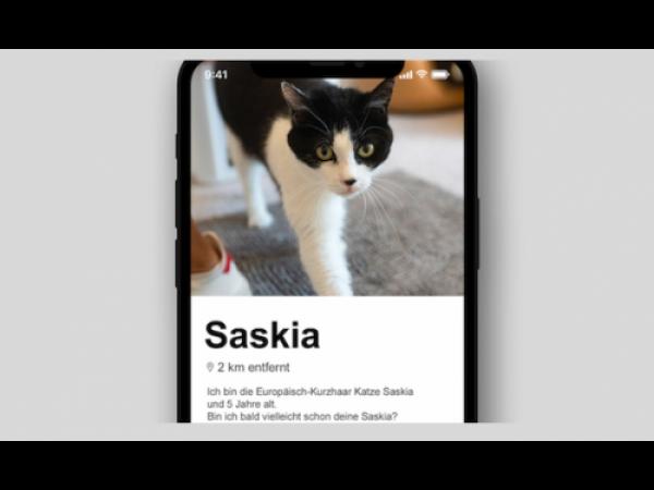 Un canile tedesco mette le foto di cani e gatti su Tinder per le adozioni (e funziona)